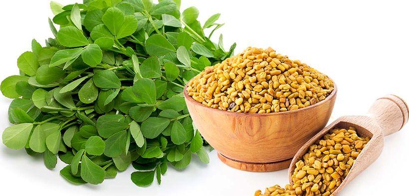 Fenugreek sebagai sumber kalsium, zat besi, vitamin, dan mineral yang baik